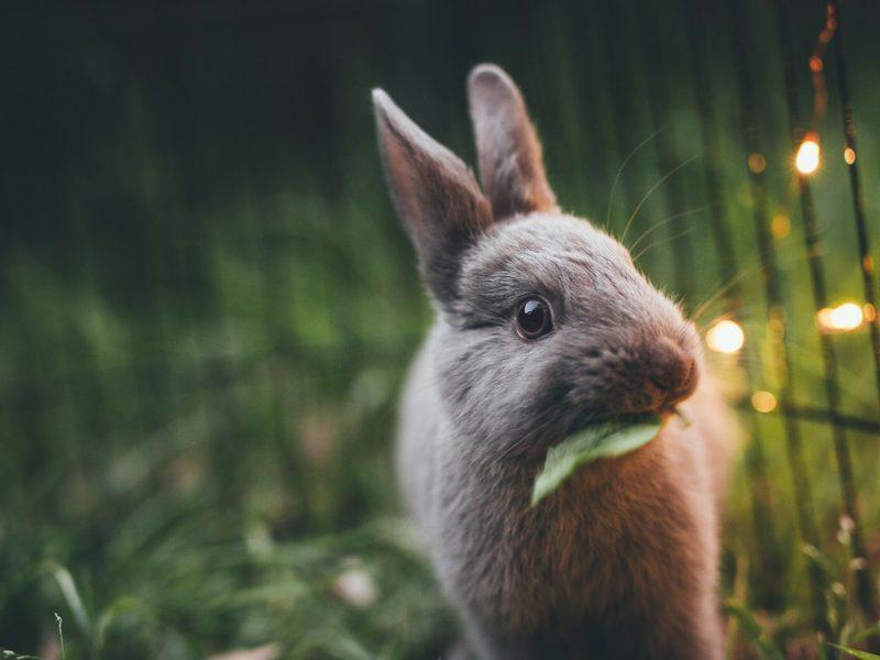 que significa no testado en animales