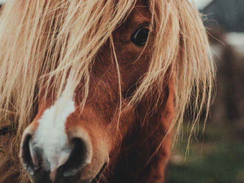 tintes naturales no testados en animales