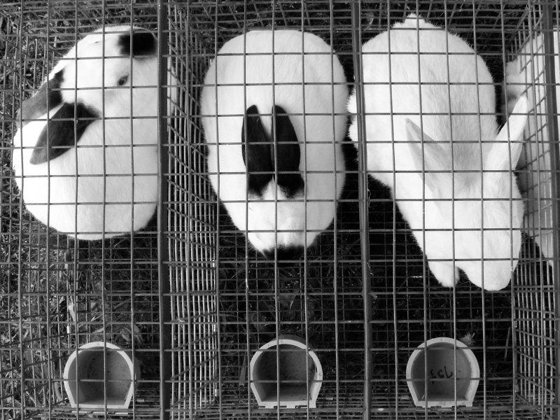 Marcas que testan en animales