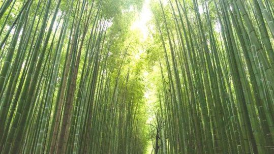 Ecotools productos de belleza natural