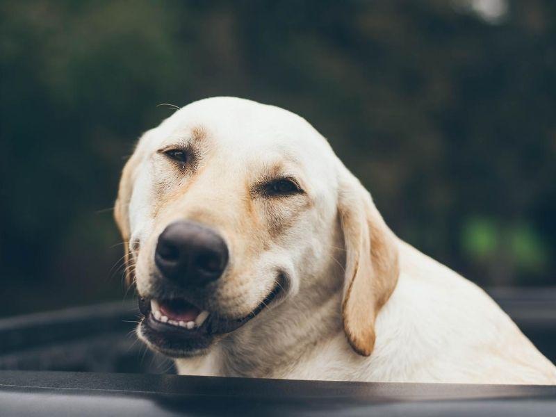 Dentifricos veganos y no testados en animales